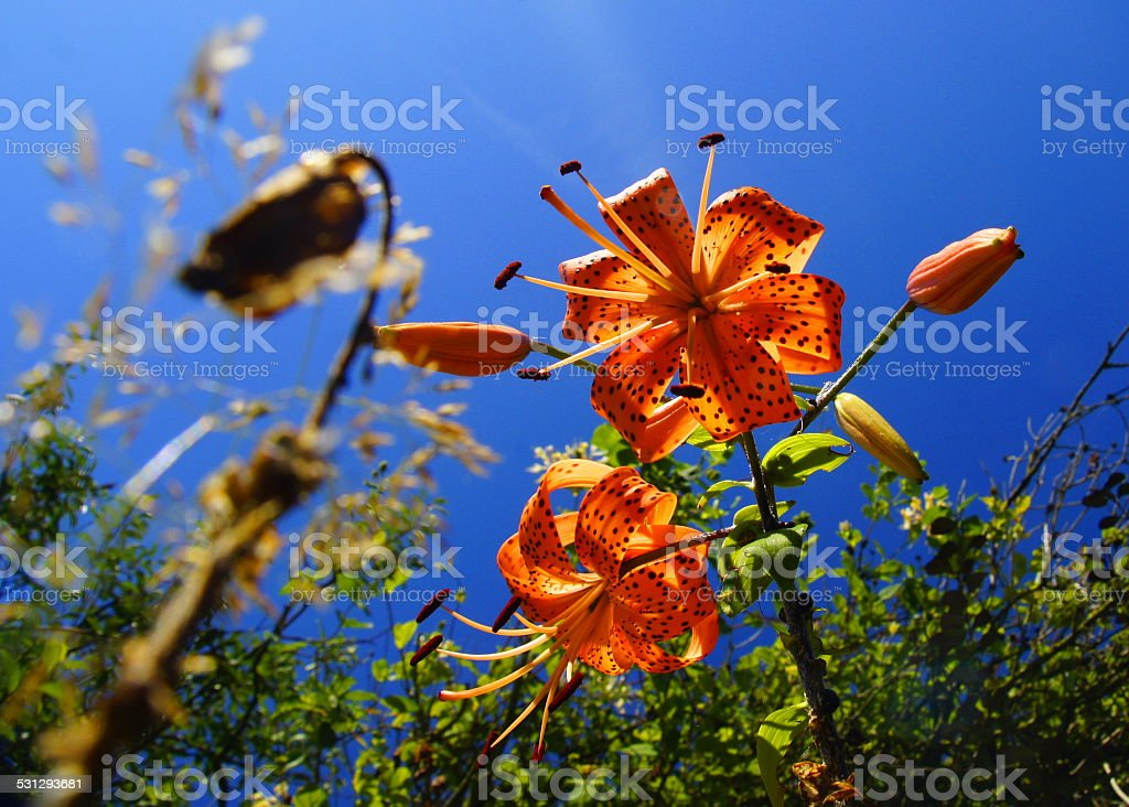 Blossom, the time is now! stock photo