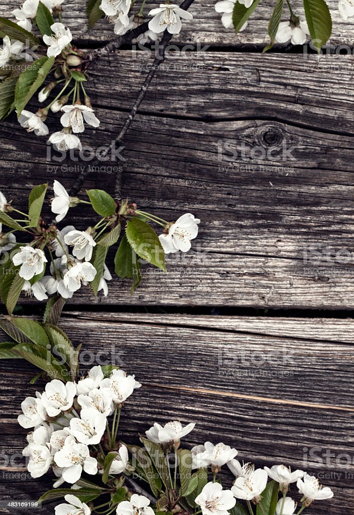 Blossom tree on wooden wall royalty-free stock photo
