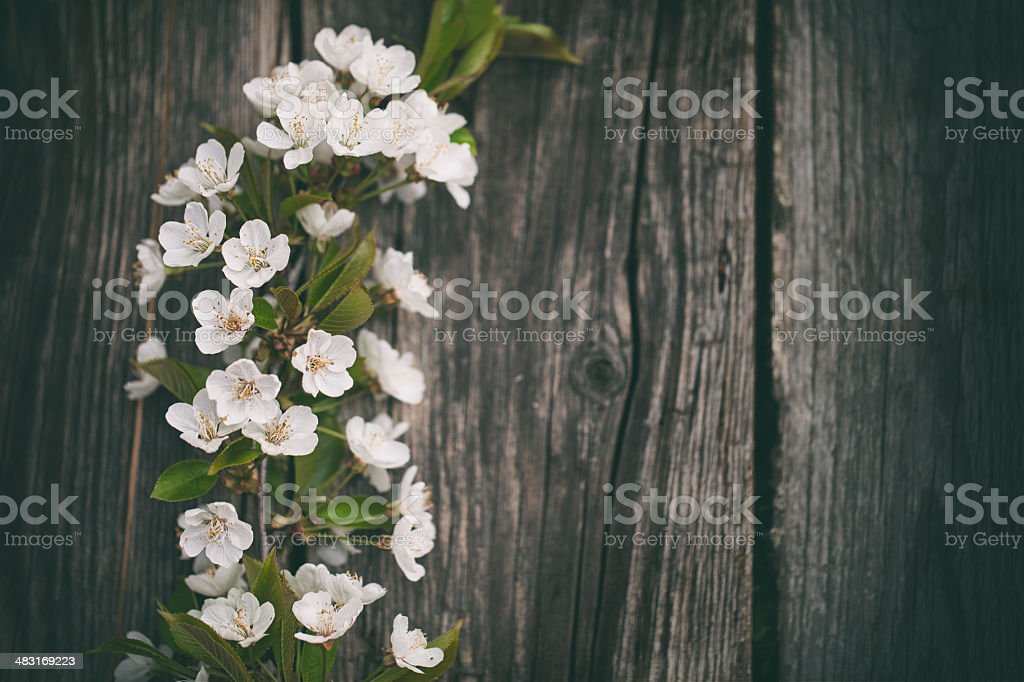 Blossom tree on wooden wall royalty-free stock photo