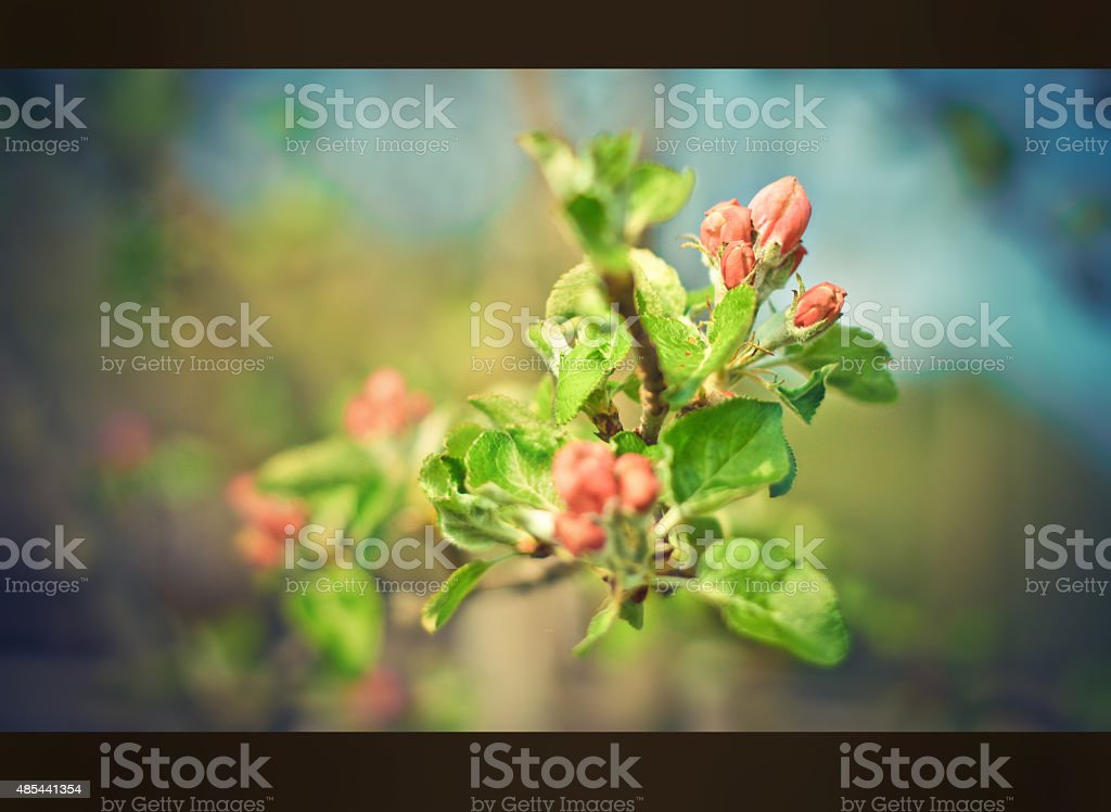 Blossom tree over nature background. Spring flowers. romantic mood stock photo