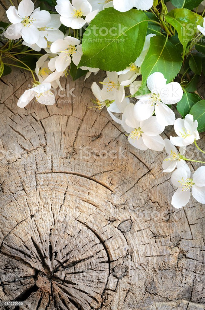 Blossoming apple tree on wooden background stock photo