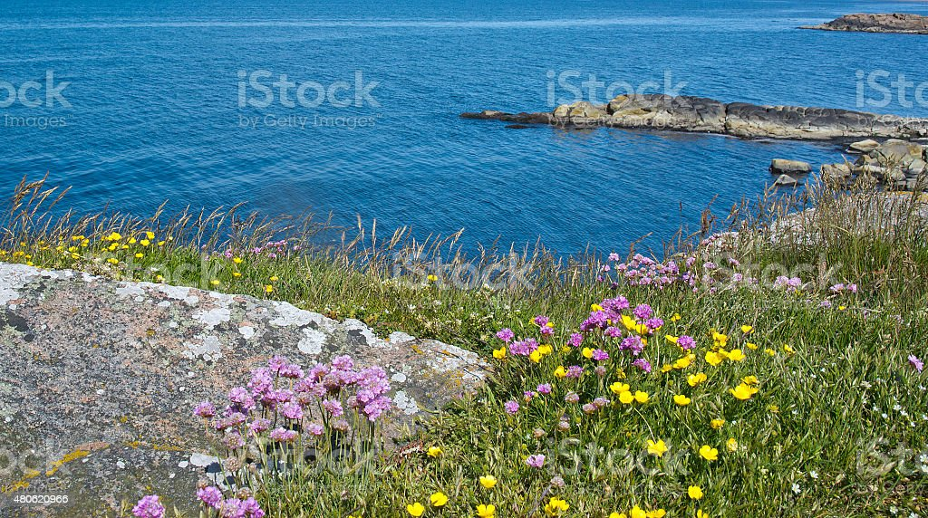 Blossoming coastal green landscape stock photo