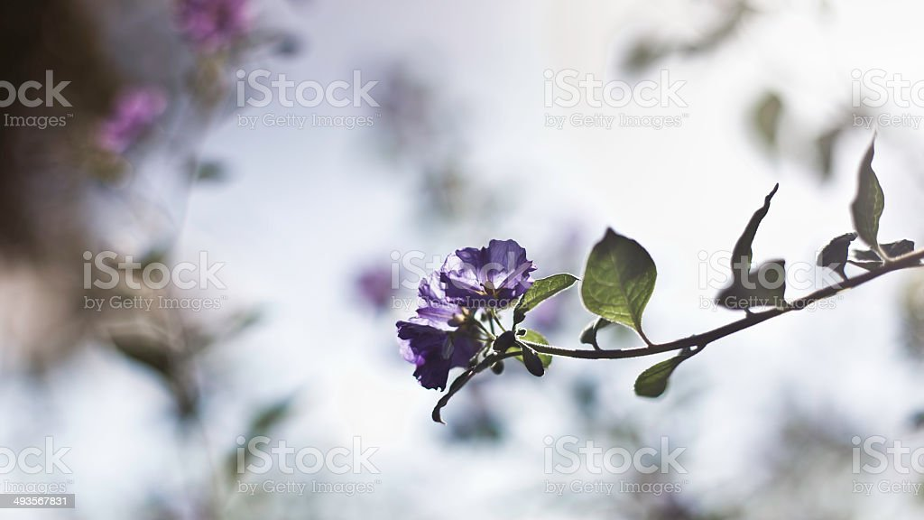 Blossoming Flowers royalty-free stock photo