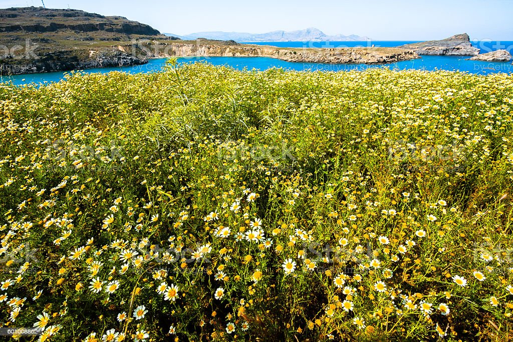 Blossoming in the Coastline of Rhodes Island stock photo