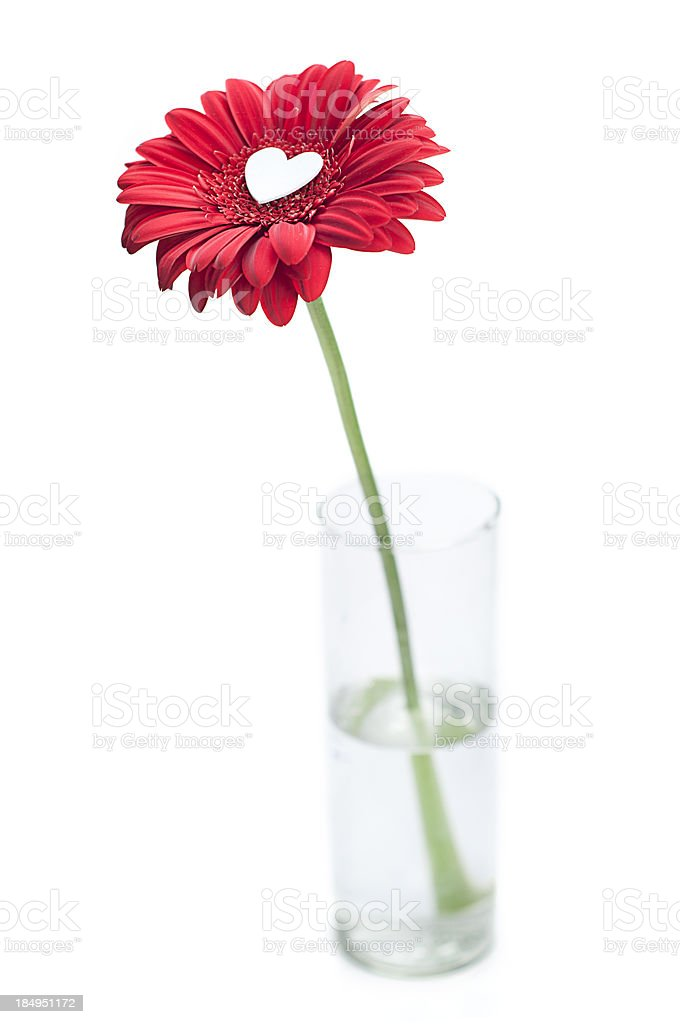 Blossoming Love royalty-free stock photo