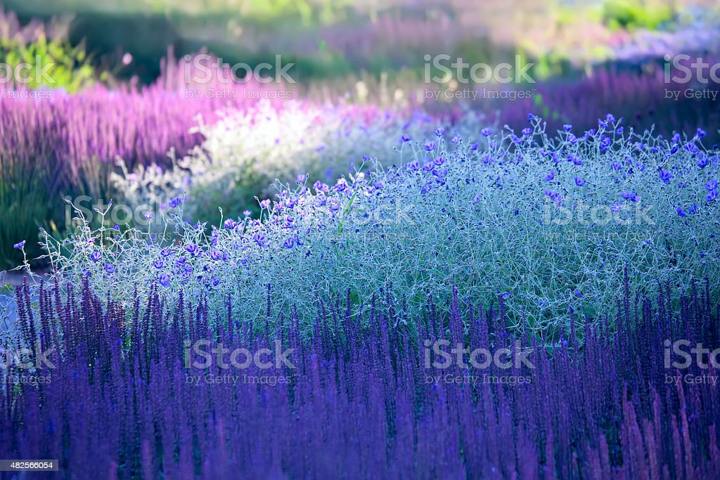 Blossoming plants - landscaping stock photo