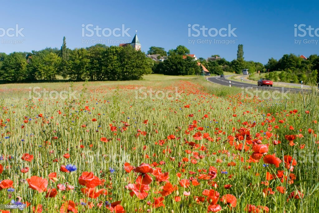 Blossoming poppy field at Bobbin, Rugen Island royalty-free stock photo