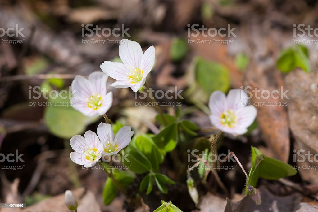 Blossoming spring flowers stock photo