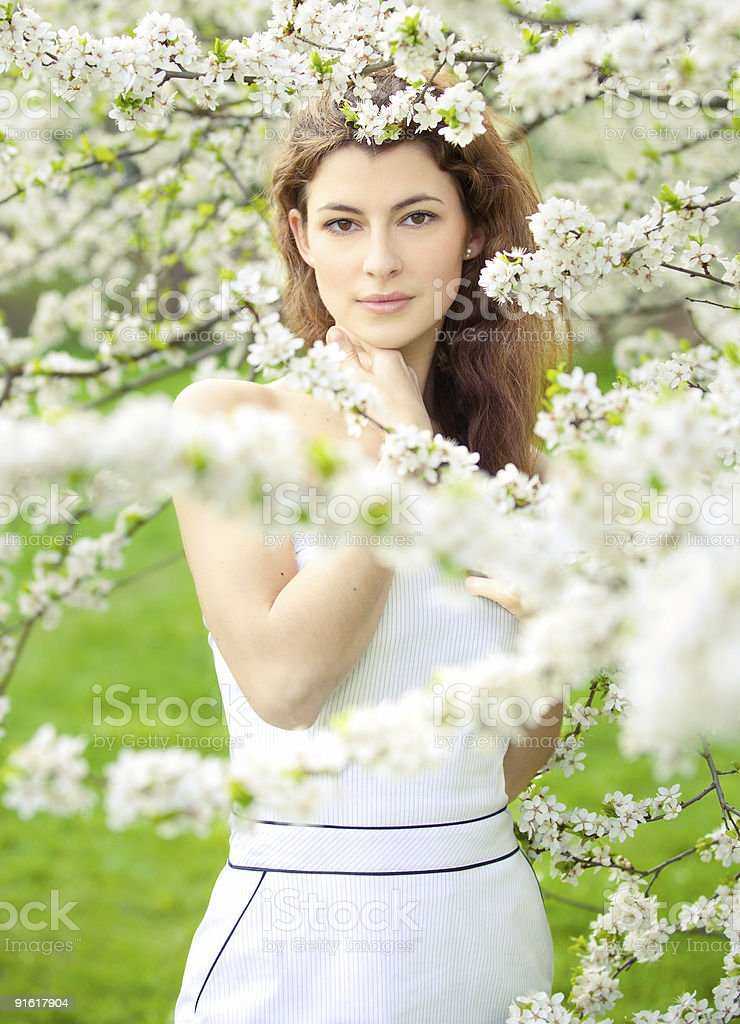 blossoming spring royalty-free stock photo