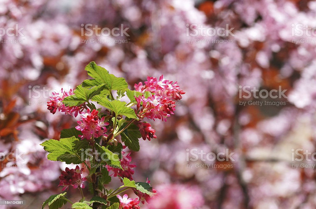 Blossoming springflowers stock photo