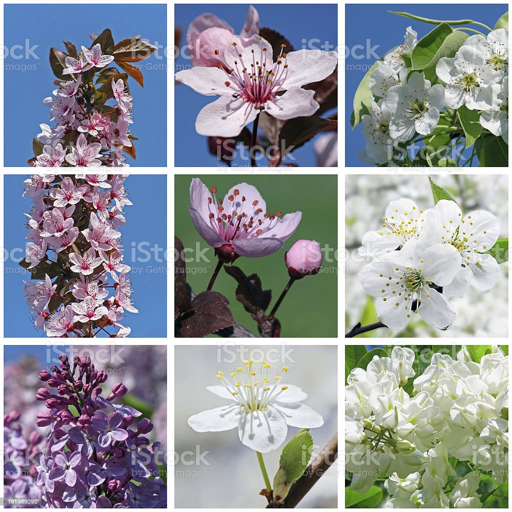 blossoming trees and bushes royalty-free stock photo