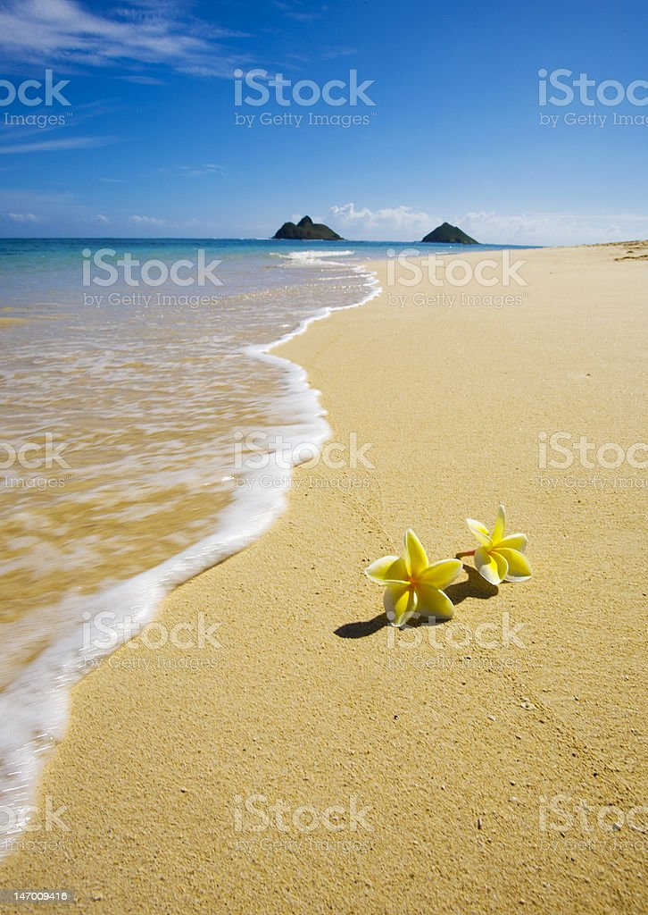 blossoms lie on the beach in Hawai stock photo
