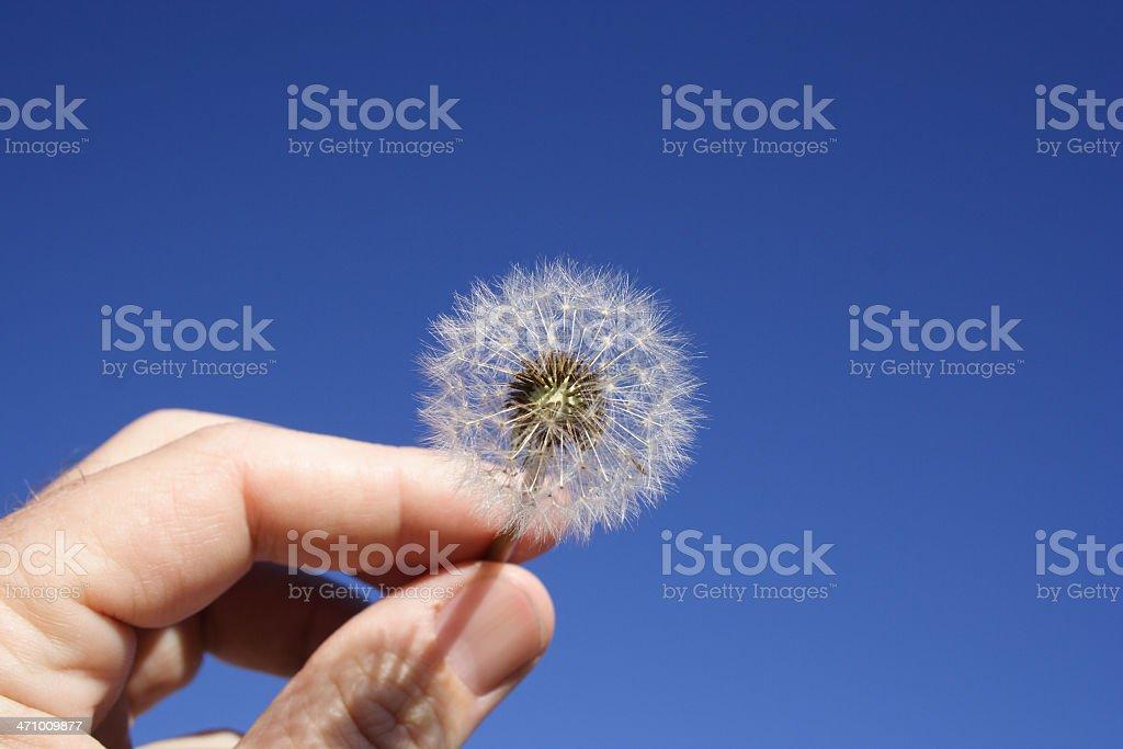 Blow stock photo