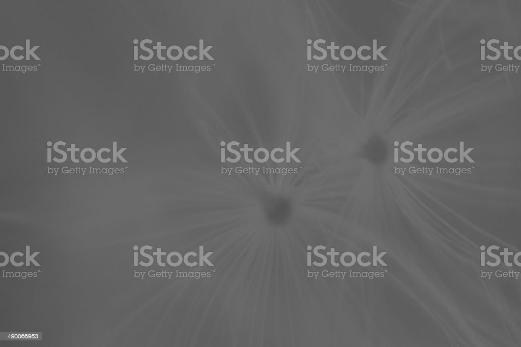 blowball detail stock photo