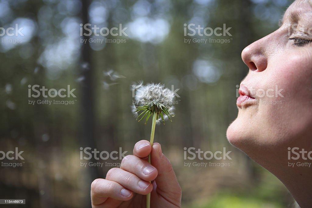 Blowing Dandelion stock photo