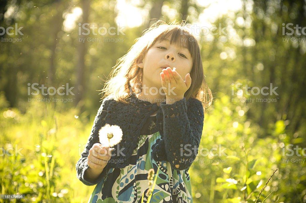 Blowing Dandelion royalty-free stock photo