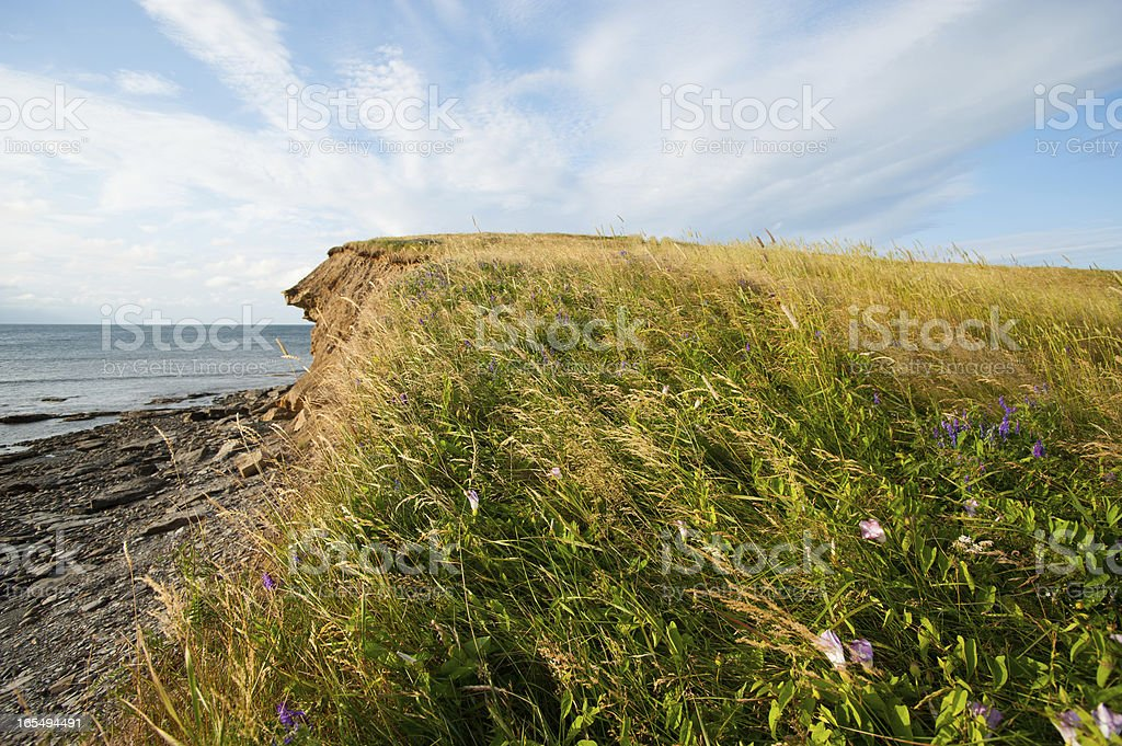 Blowing Grass royalty-free stock photo