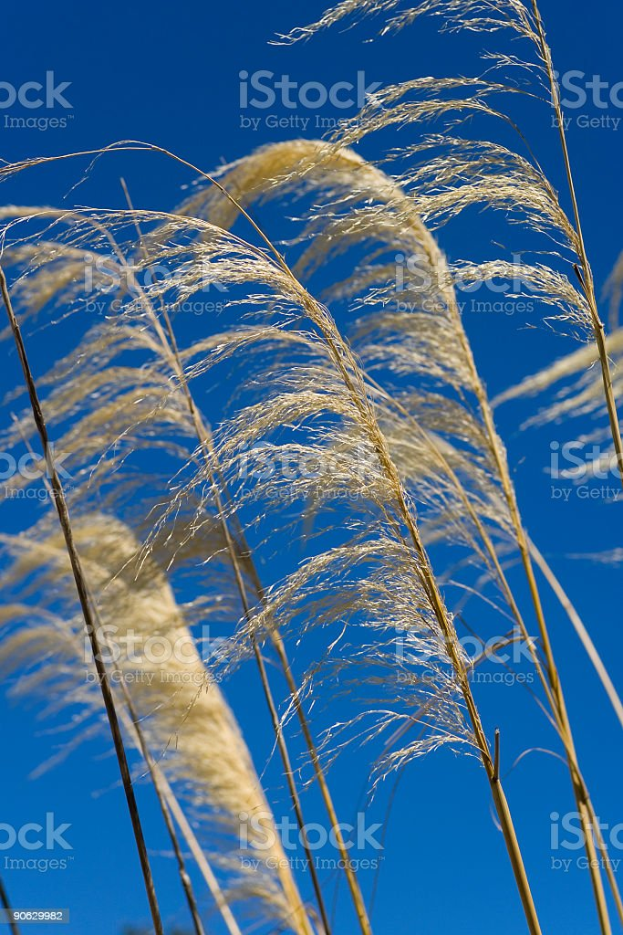 Blowing In The Wind royalty-free stock photo