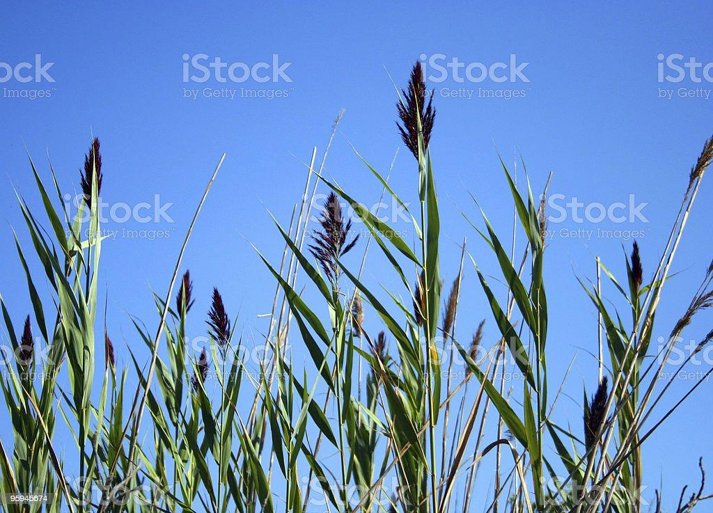 Souffle dans le vent. photo libre de droits