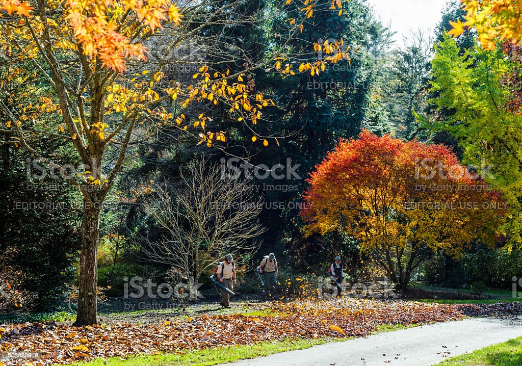 Blowing leaves in autumn stock photo