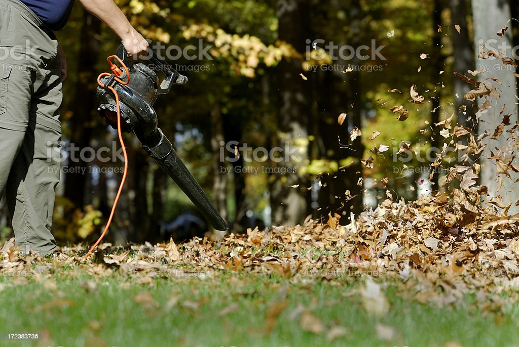 Blowing leaves stock photo