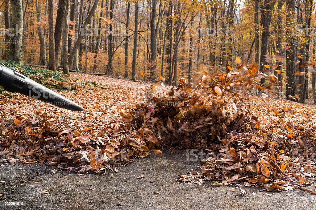 Blowing Leaves with a Powerful Blower to Clear Pavement stock photo