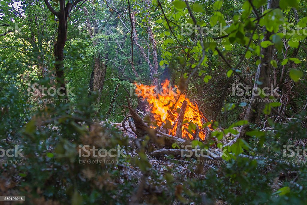 Blowing on flaming trees during a forest fire. stock photo