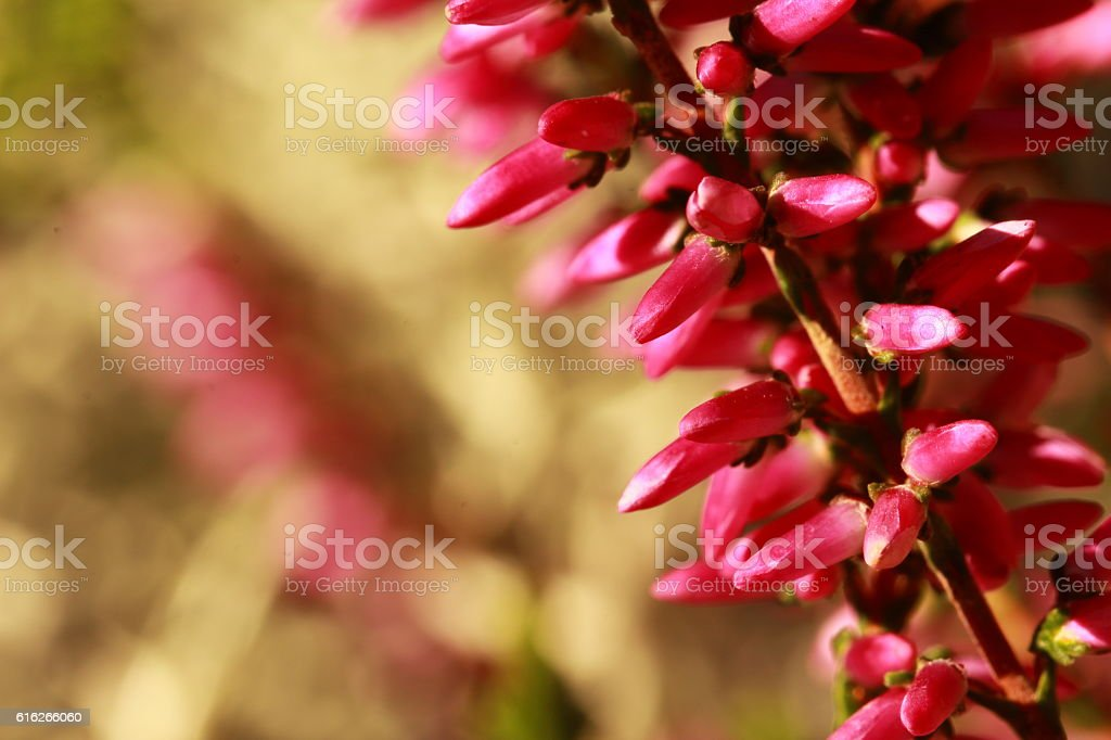 Blütenpracht stock photo