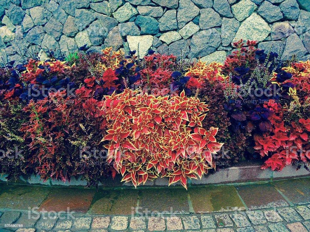 Blütenrand stock photo