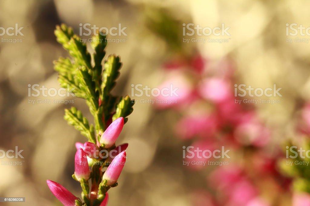 Blütentraum stock photo