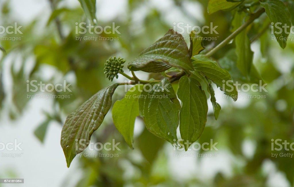 Blätter im Regen stock photo