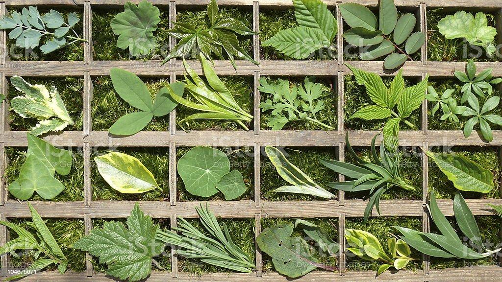 Blätter photo libre de droits