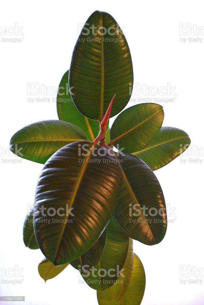 Blätter stock photo