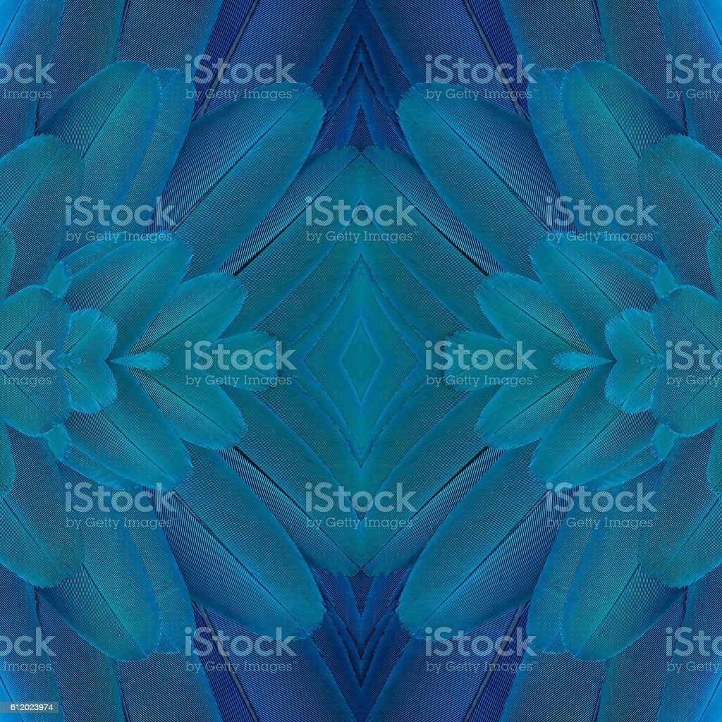 Plumes Ara bleu et or photo libre de droits