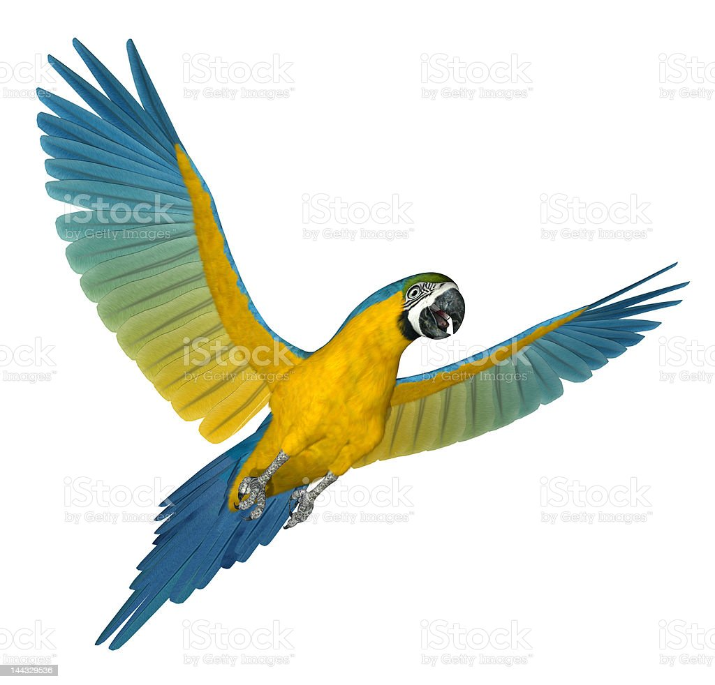 Blue and Gold Macaw Flying 2 stock photo