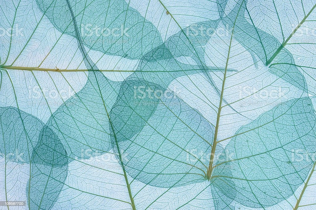 Blue and green decorative leaves stock photo