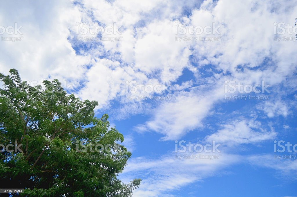 blue and green sky with tree royalty-free stock photo