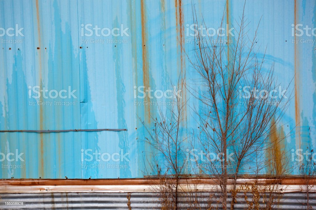 blue and tree royalty-free stock photo