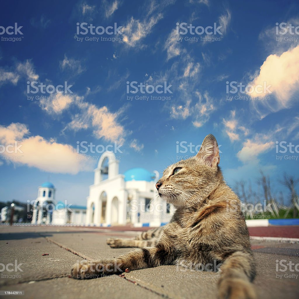 Blue and White Church bell with cat royalty-free stock photo