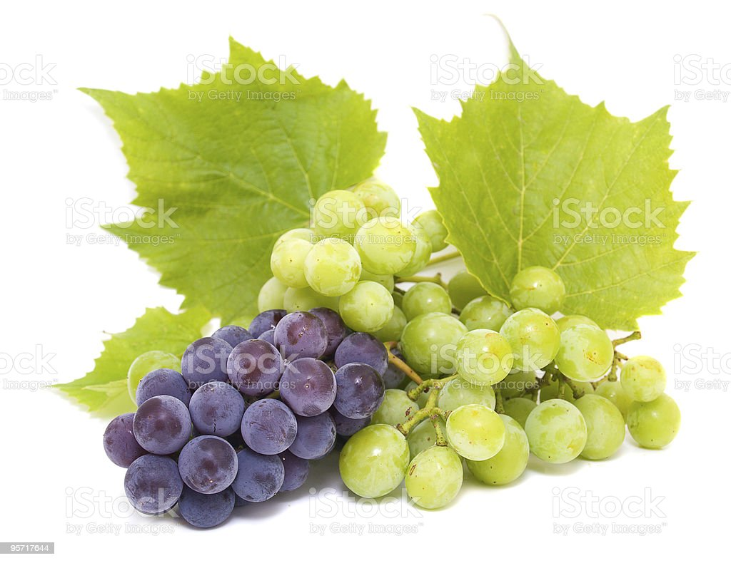 Blue and white grape stock photo