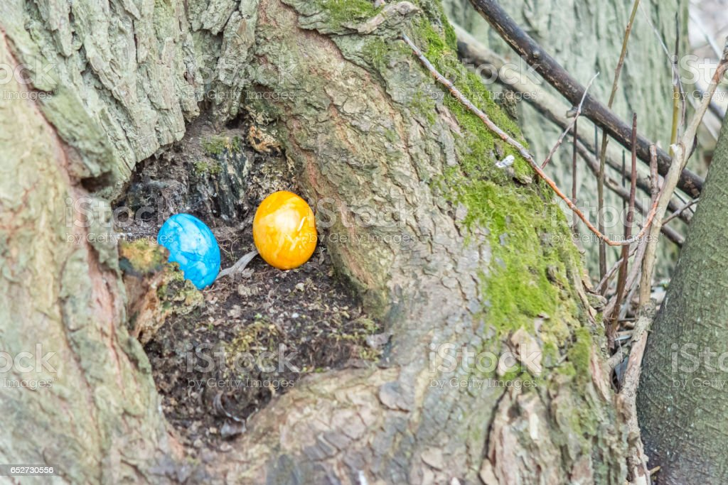 Blue and yellow Easter egg is hidden in a tree trunk stock photo