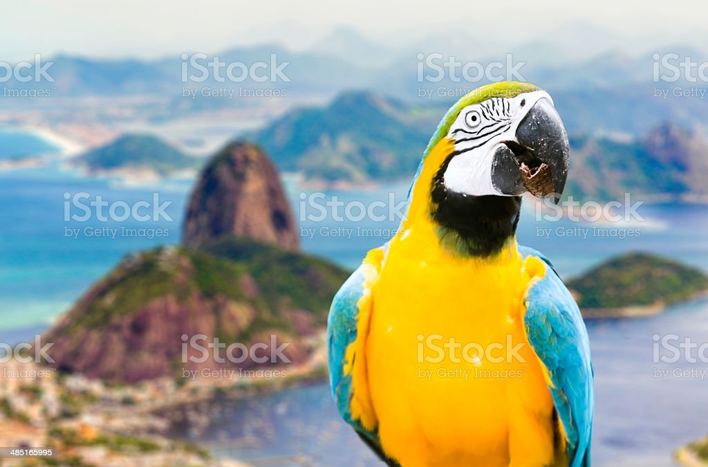 Blue and Yellow Macaw in Rio de Janeiro, Brazil stock photo