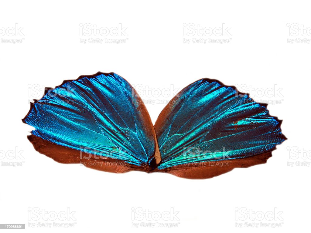 Blue Angel Wings 2 royalty-free stock photo