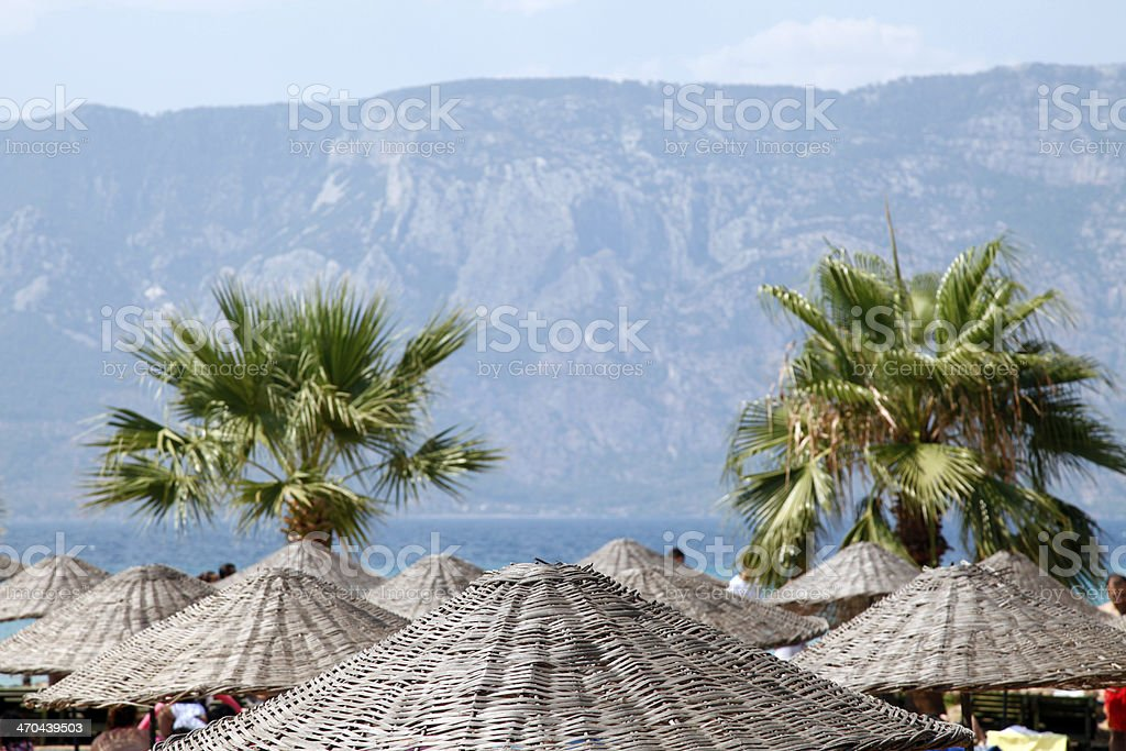 blue beach focus on coconut tree stock photo