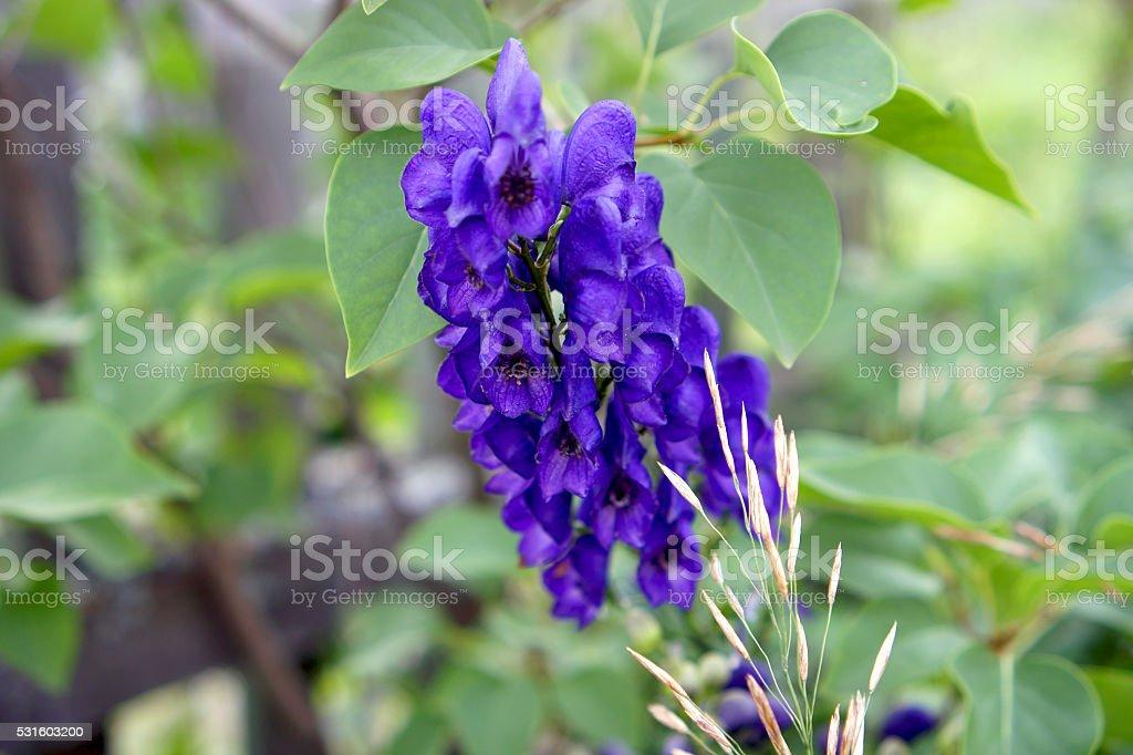 Blue bell flower in green grass stock photo
