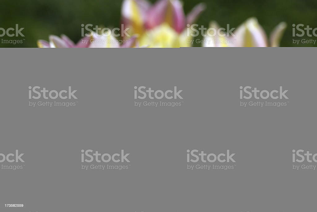 Blue bell flowers royalty-free stock photo