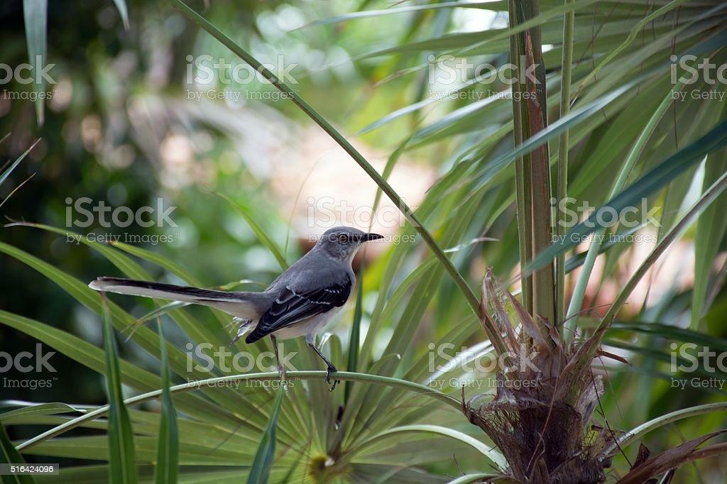 Blue bird on leaf. stock photo