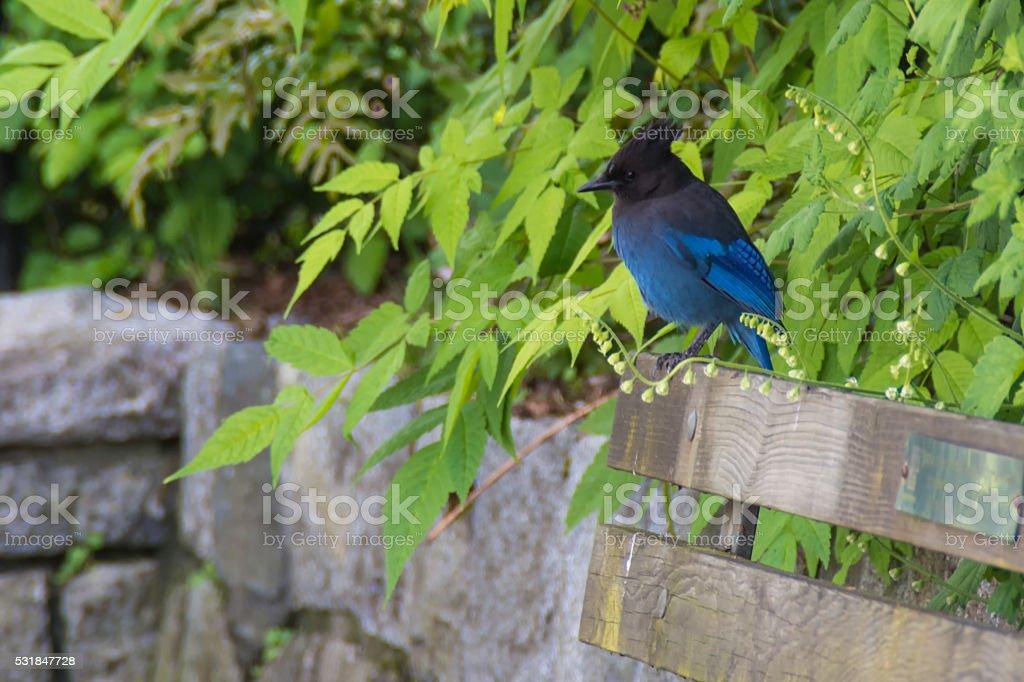 Blue bird on sitting on park bench stock photo