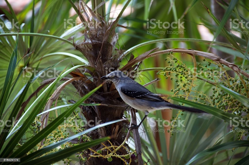 Blue bird on tree branch. stock photo