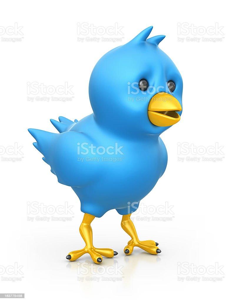 blue bird stock photo